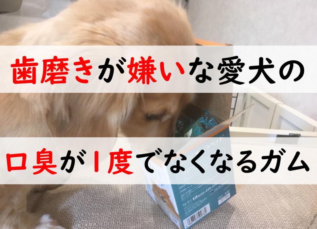 歯磨き嫌いな犬