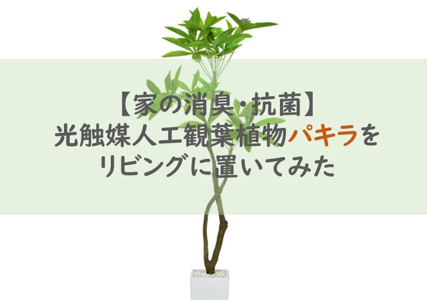 【家の消臭・抗菌】光触媒人工観葉植物パキラをリビングに置いてみた