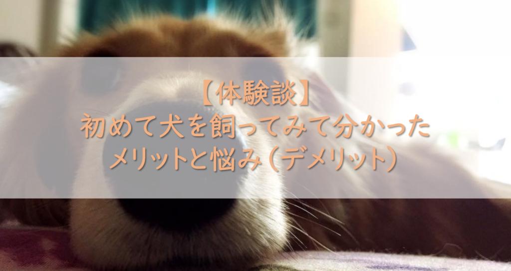 【体験談】初めて犬を飼ってみて分かったメリットと悩み(デメリット)