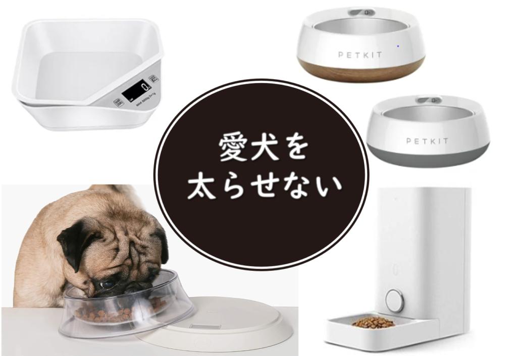 【便利グッツ】愛犬の肥満に最適!体重管理に便利な犬用食器4選
