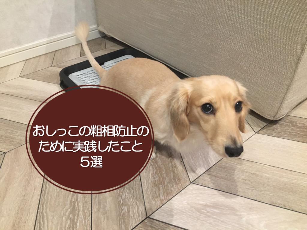 【犬がトイレを覚えない】おしっこの粗相防止のために実践した方法5選
