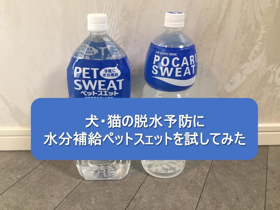 【購入レビュー】犬・猫の脱水予防に水分補給ペットスェットを試してみた