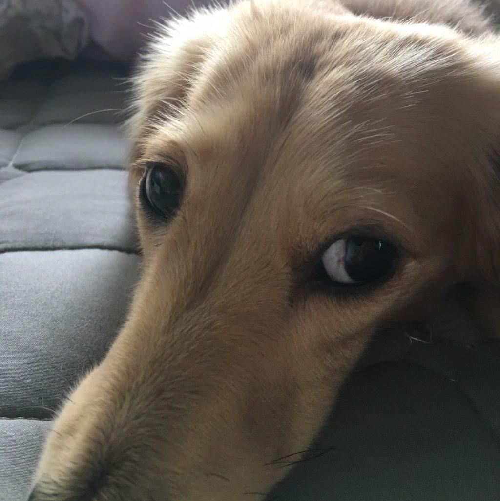 【体験談】愛犬のおしっこに血が・・心配して動物病院を受診した結果